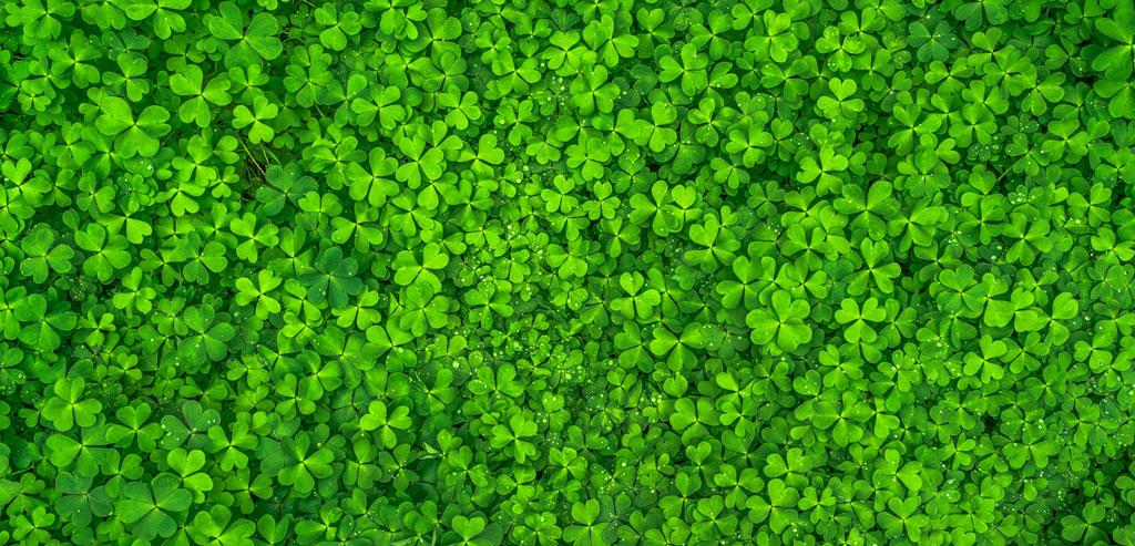 روانشناسی رنگها-رنگ سبز